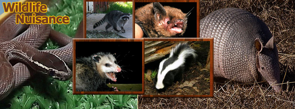 East Texas Wildlife Nuisance Control