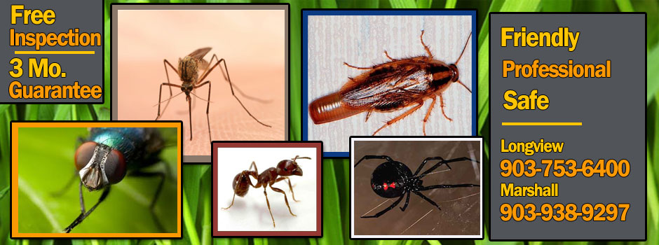 East Texas pest control services.