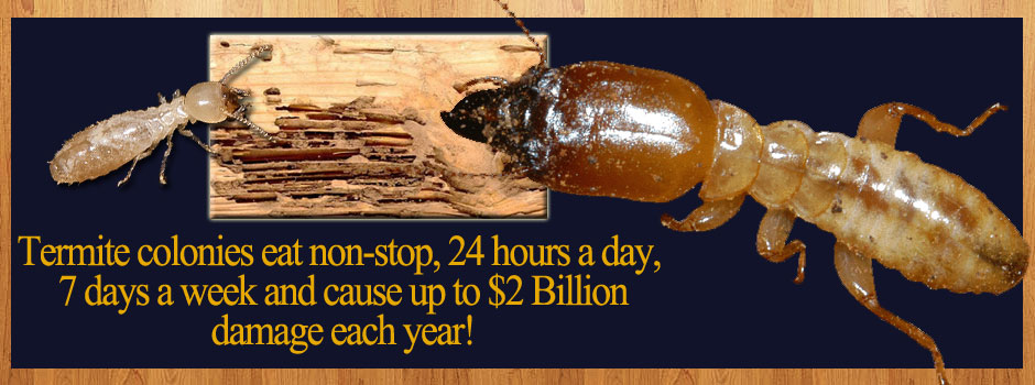 East Texas termite solutions.